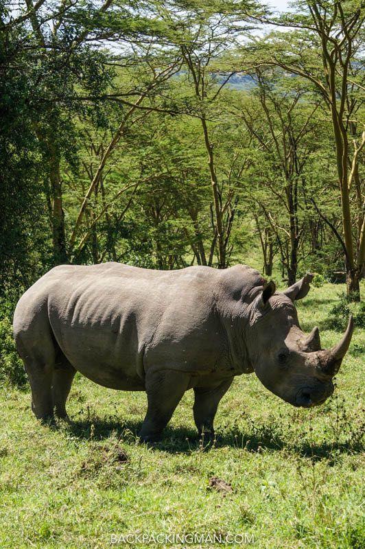 Lake Nakuru National Park Safari - Rhinos Everywhere