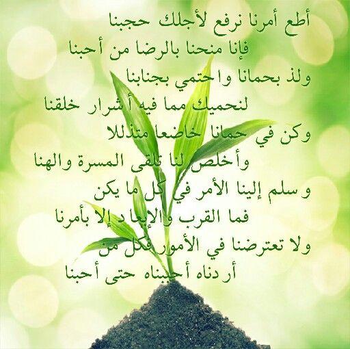 كلمات قصيدة اطع امرنا ل علي بن محمد بن وفا Plants Herbs Garden