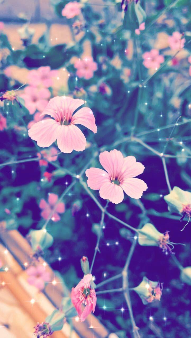 Sigueme Como Mildred Rojas Solo Un Click Y Listo Gracias Dengan Gambar Fantasi Kertas Dinding Bunga