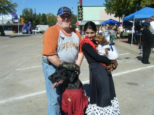 Sampson One Of My Black Great Danes In Texas Wins The Halloween