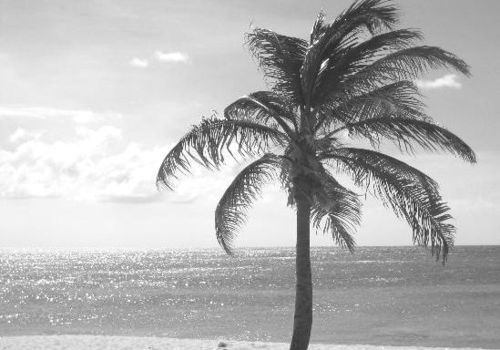 Paradise   Pinterest   @shopcdahl