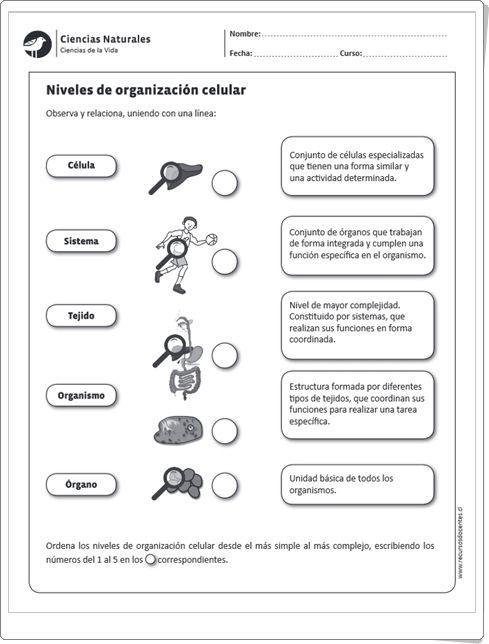 Niveles de organizaci n celular ficha de ciencias naturales de primaria 6 primaria - Estructuras libros vivos ...