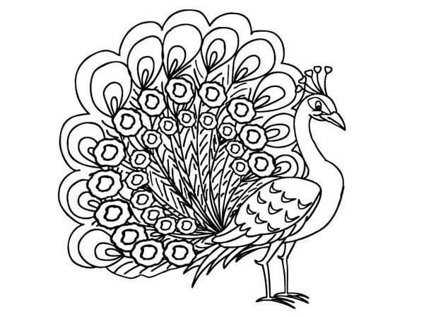 Peacock Color Pages Coloring Pages