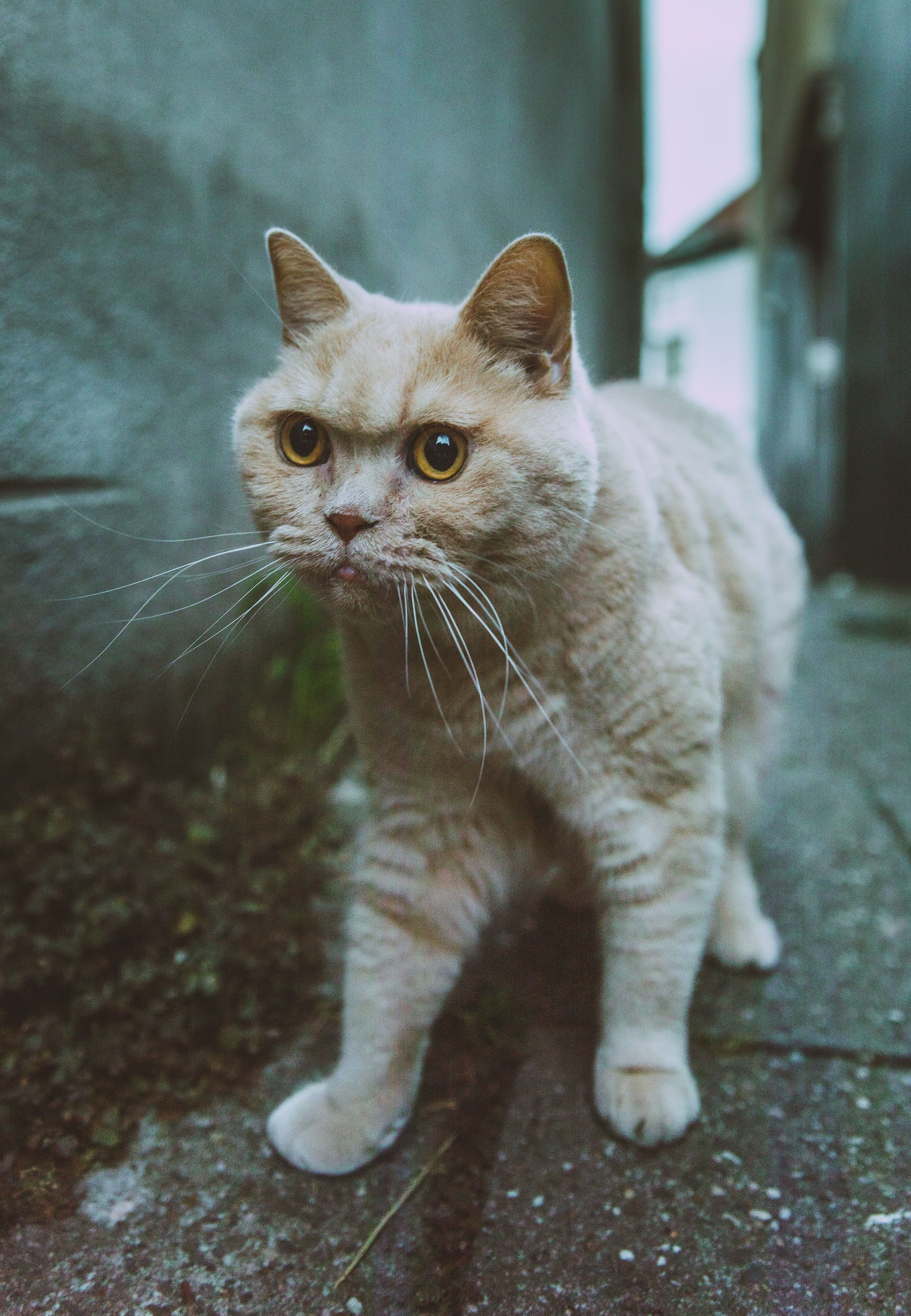 Top 6 Signs That Show Your Cat Is Happy Welfar4us In 2020 Cat Pics Cats And Kittens Beautiful Cats Pictures
