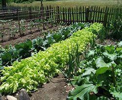winter-vegetable-gardening
