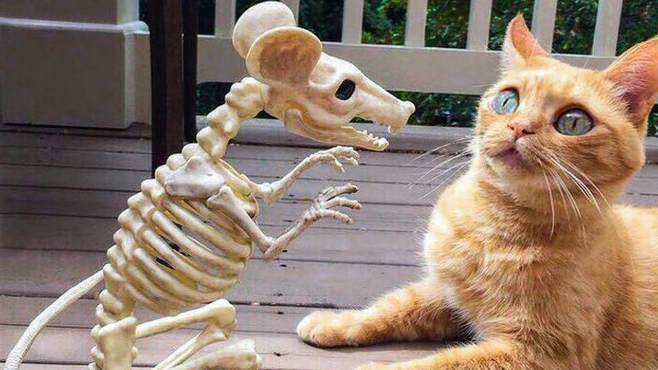 Funniest Animals Awesome Funny Animals Life Videos Cutest Anima 可愛すぎる動物 おもしろビデオ おかしな動物