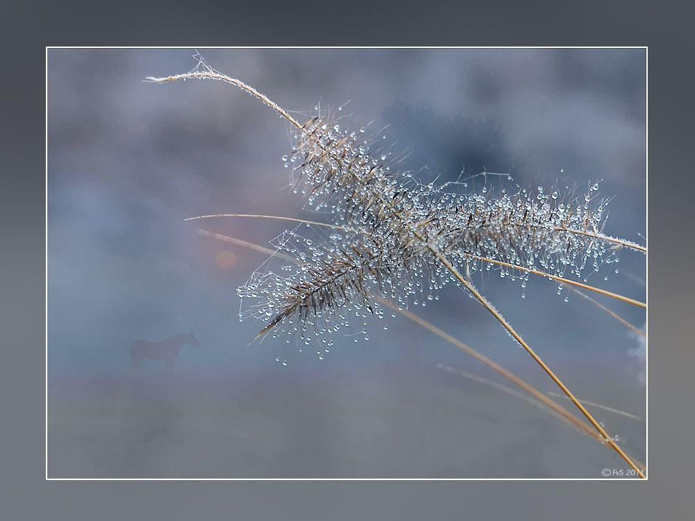 Nature at its best. dewdrops on grasses
