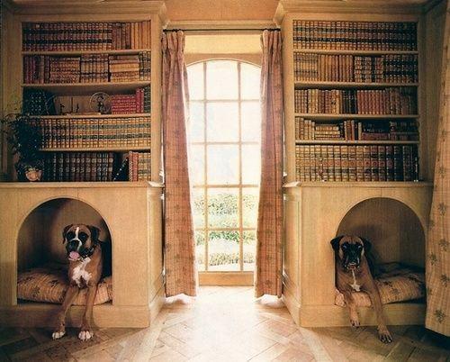 Dog bed under bookshelf