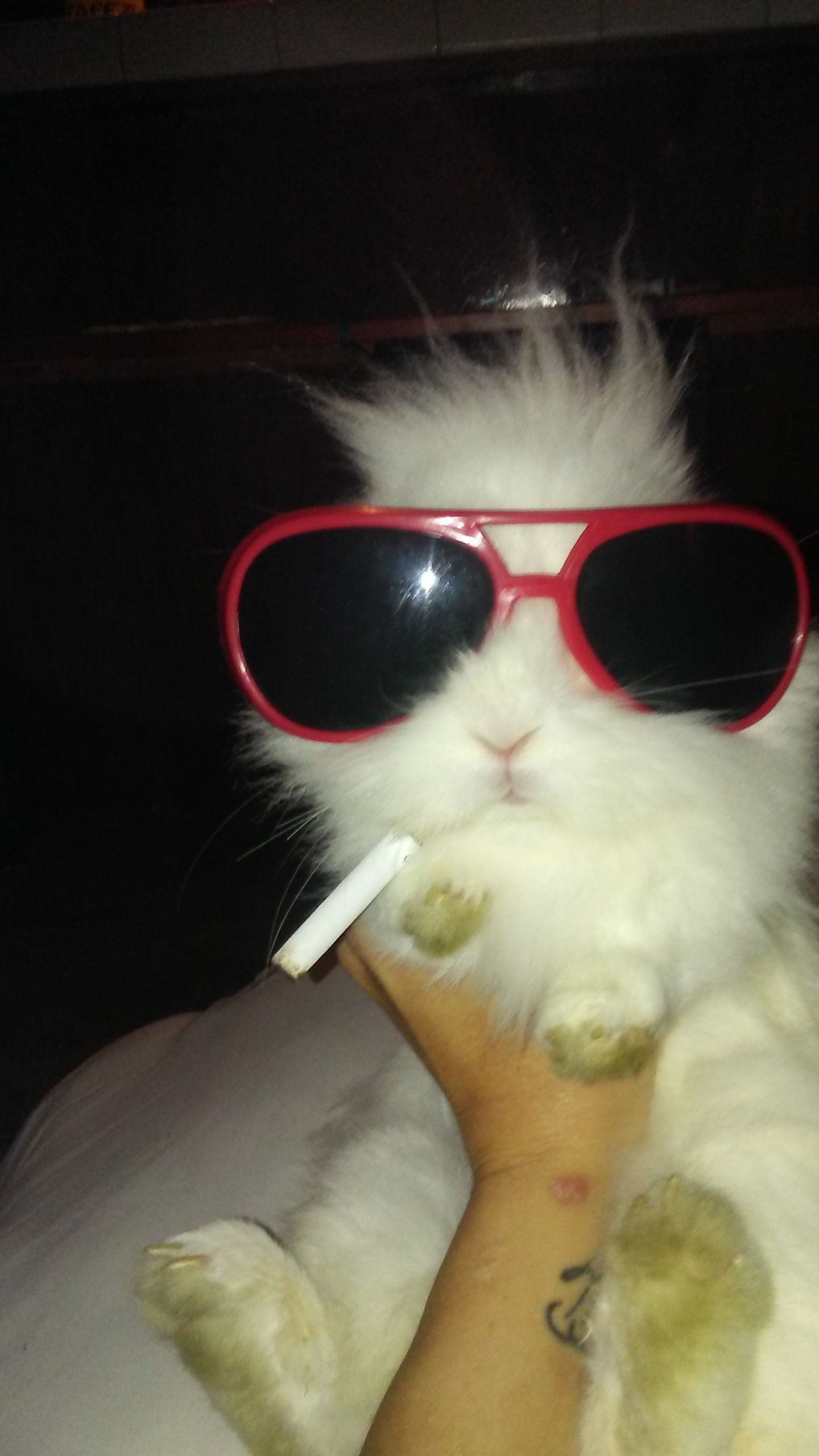 i wear my sunglasses at night Cat eye sunglasses, Eye