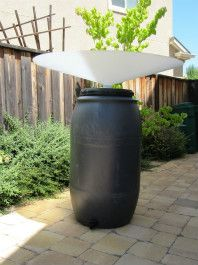 Rain Saucer For Collecting Rain Water With No Gutters Rain Water Collection System Rain Water Collection Diy Rain Water Collection