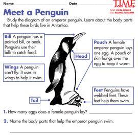 Antarctica Printables | TIME For Kids - Meet a Penguin | HSIE ...