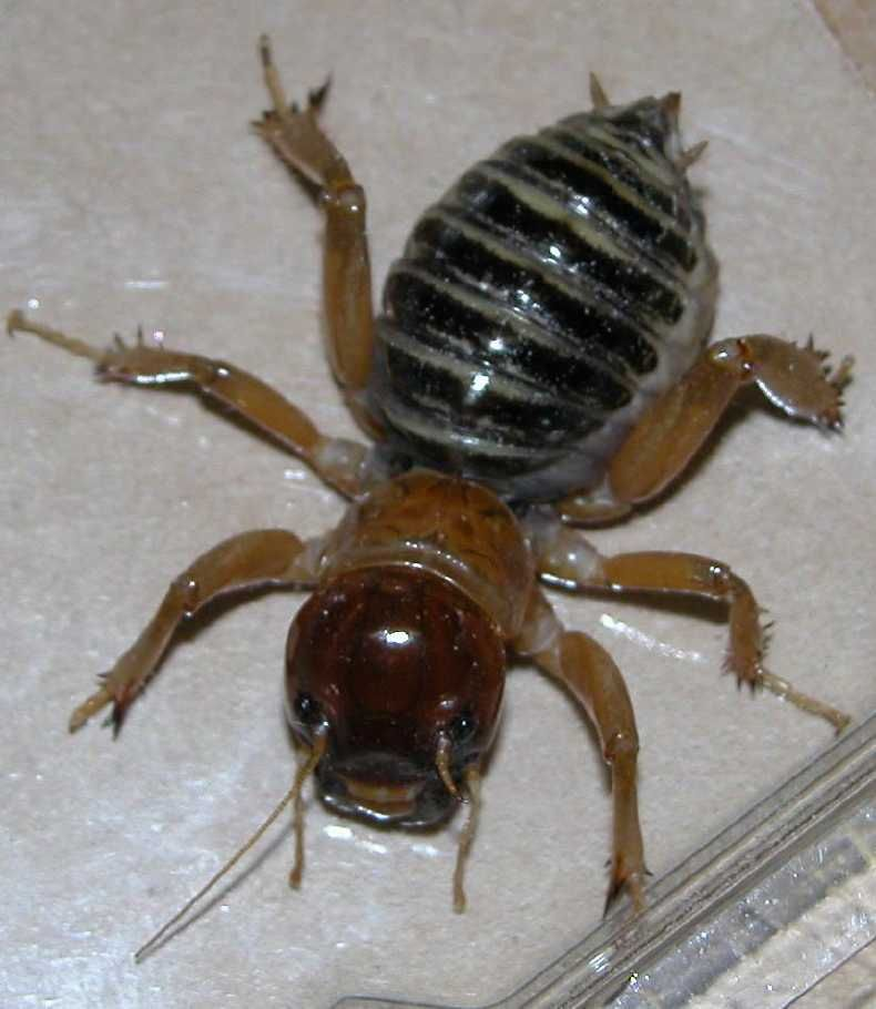 Scary Bugs Greeting Hugs Root Canals Specifically And Dental Decay In General Cool Insects Potato Bugs Scary Bugs