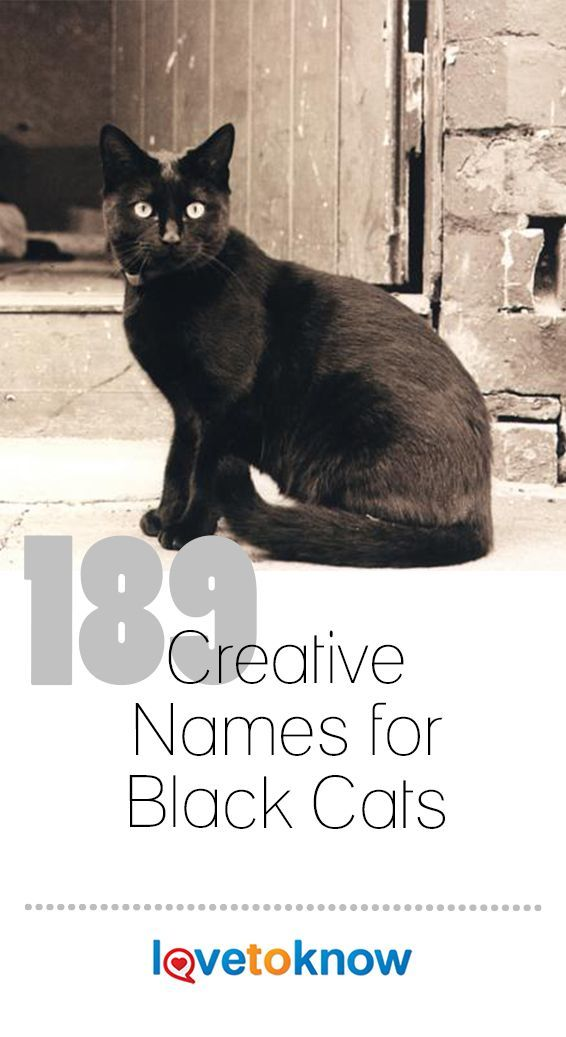 189 Creative Names for Black Cats Names for black cats