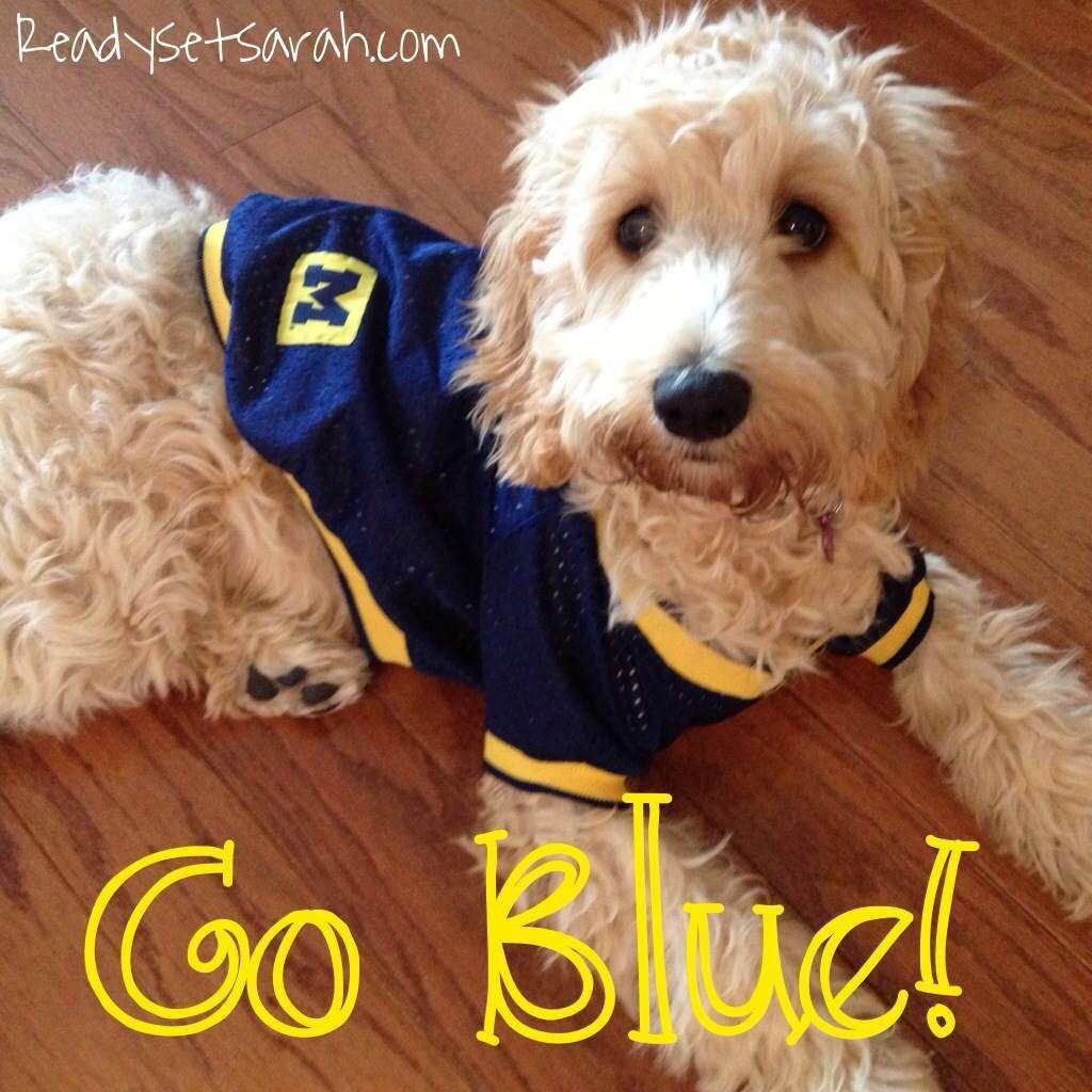 Cockapoo brinkley says go blue image by ready set sarah