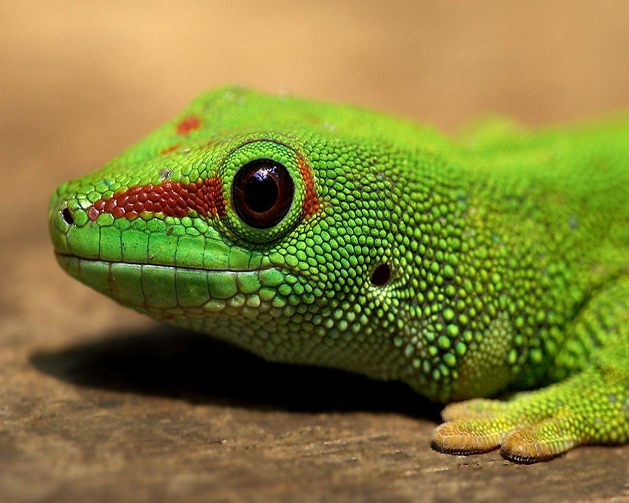 Pet Lizards For Kids wallpaper. love of reptiles