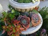 35 Indoor and Outdoor Succulent Garden Ideas ~ perfect for those of us who live in the desert. :)