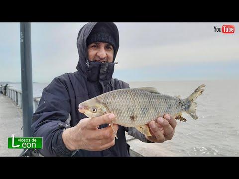 2 Pesca Probando Lombrices Artificiales Pesca En La Ciudad Youtube Pesca Lineas De Pesca Lombriz