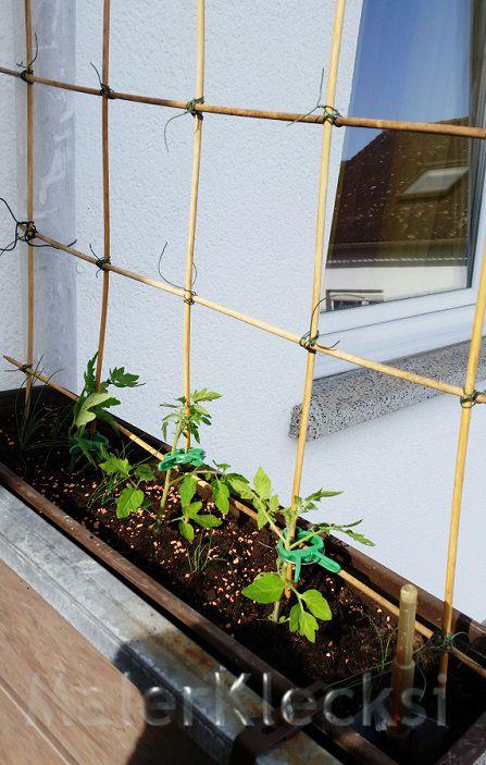 ein einfaches spalier f r tomaten im blumenkasten sichtschutz balkon pinte. Black Bedroom Furniture Sets. Home Design Ideas