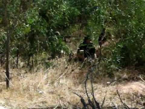 8 Best Airsoft Game images in 2012 | Airsoft, War, Games