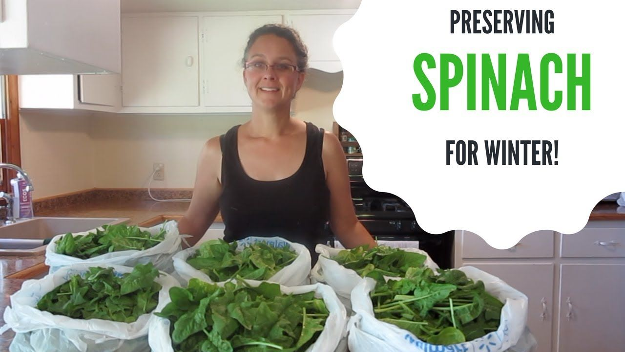 Preserving Spinach for Winter Start to Finish! YouTube
