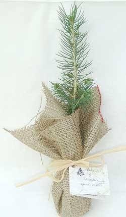 Tree Sapling Wedding Favour