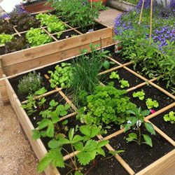 les 10 erreurs du d butant au potager et verger france plants potager kitchen garden. Black Bedroom Furniture Sets. Home Design Ideas
