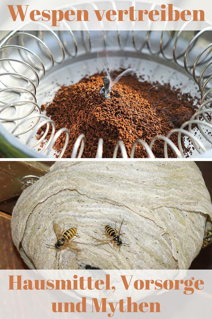 Man Mag Es Kaum Glauben Aber Wespen Sind Zum Großteil Friedliche Und Sogar Nützliche Insekten