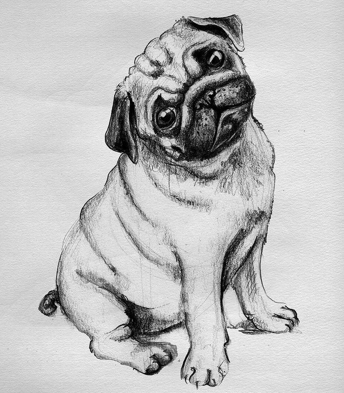 Крутые рисунки собак карандашом