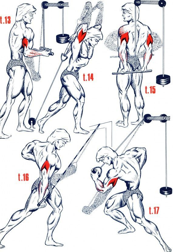 Fabuleux Triceps3 … …   Health, Fitness and Body Building   Pinterest  KI82