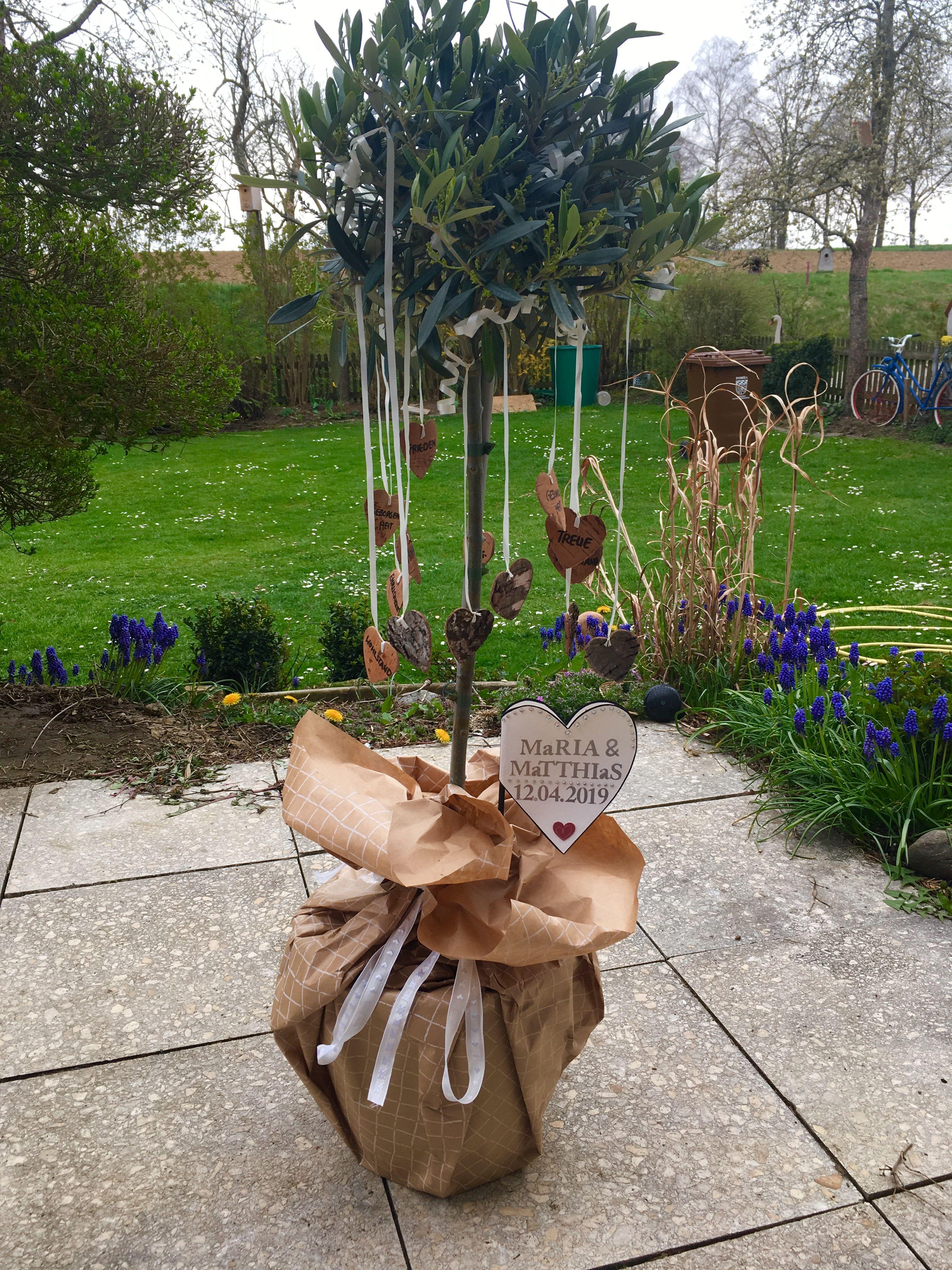 Olivenbaum Als Geschenk Geschenke Geschenk Hochzeit Hochzeitsgeschenk