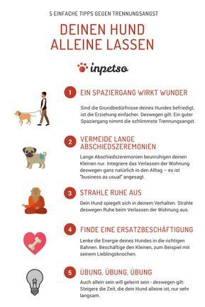 Photo of Leave the dog alone: 5 tips against separation anxiety – inpetso