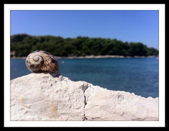 Sea shell on a rock by KrisztisMind on Etsy