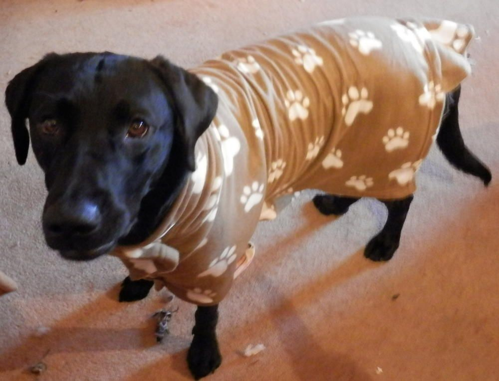 Winter Dog Coat | Dog, Sewing patterns and Patterns