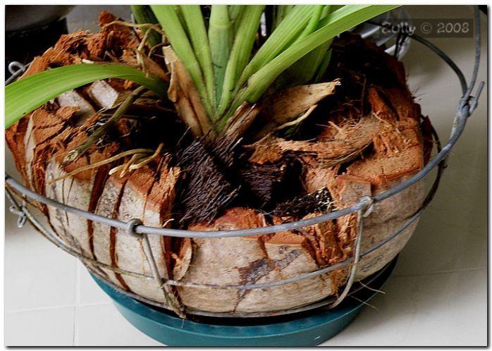Como sembrar orquideas orquideas pinterest como - Macetas para orquideas ...