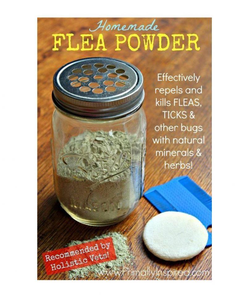 Homemade Flea Powder Recipe Flea powder for dogs, Flea