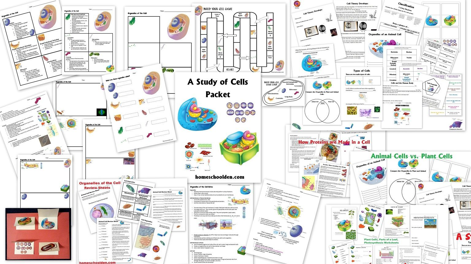 Animal And Plant Cell Worksheets