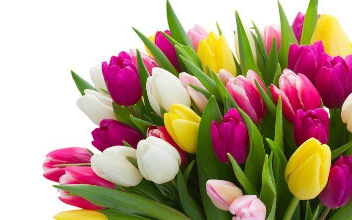 Grande Mazzo Di Fiori.Scarica Sfondi Mazzi Di Fiori Tulipani Un Gran Mazzo