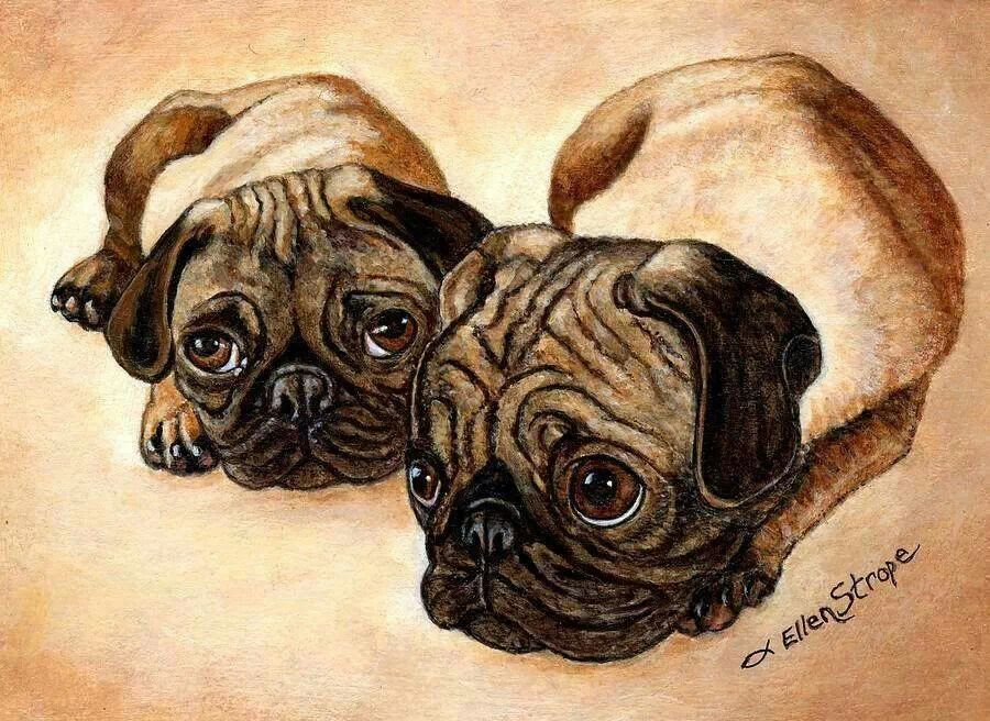 Cute puggies
