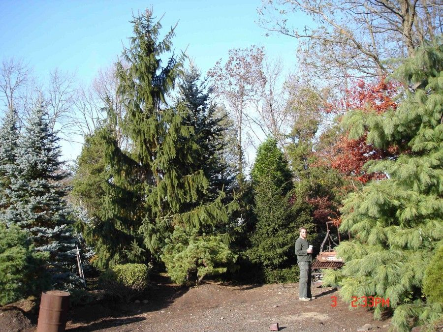 Hickory Hollow Nursery Garden Center In Orange County Ny Large Selection Of Ornamental Specimen Trees Tuxedo