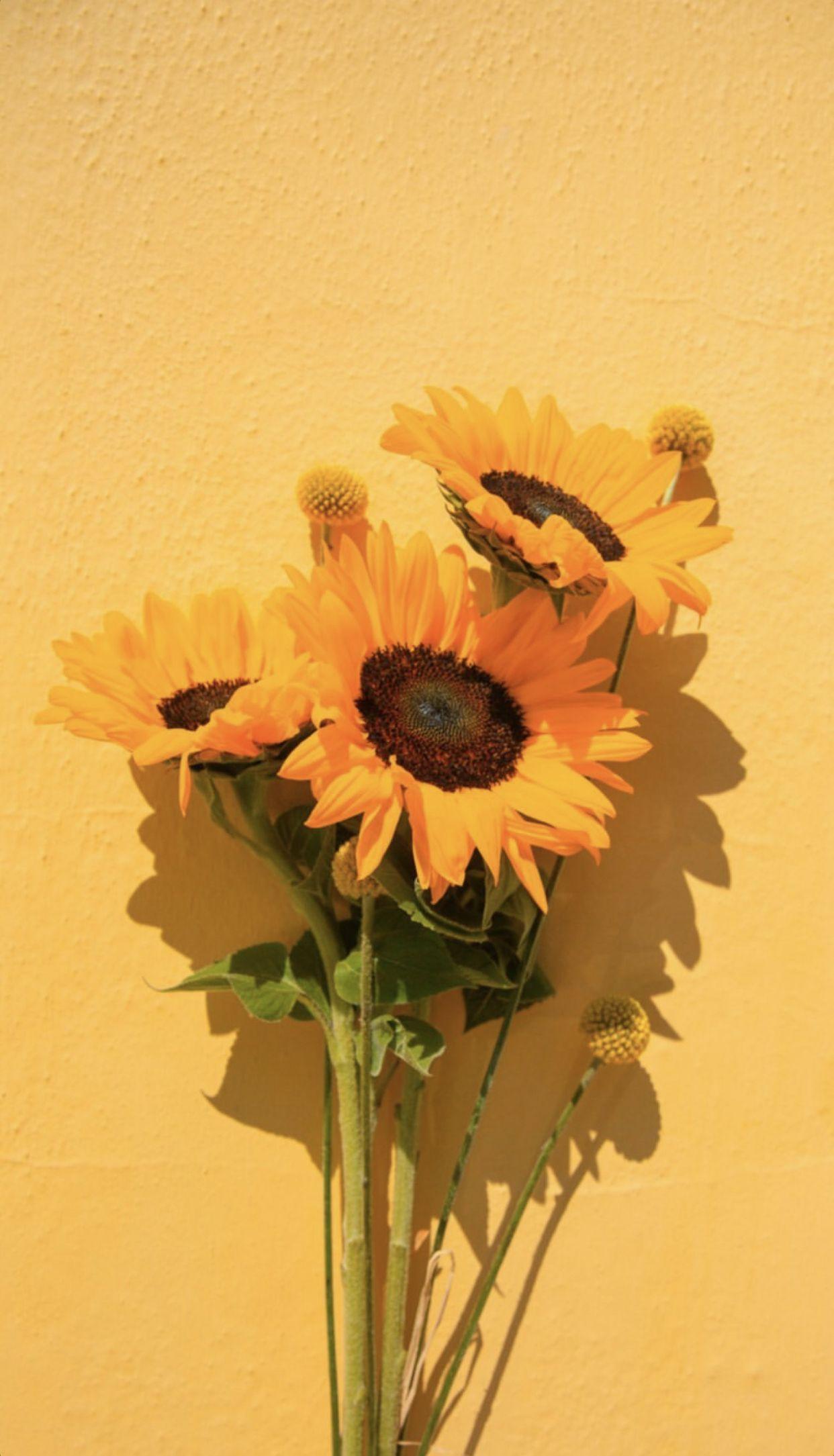 Yellow Summer Sunflowerwallpaper In 2020 Sunflower Wallpaper Flower Phone Wallpaper Sunflower Pictures