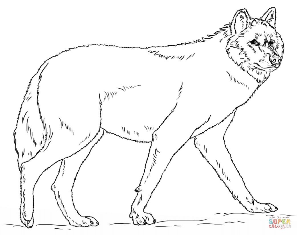 Realistic Grey Wolf Animal Coloring Pages Coloring Pages Fox Coloring Page