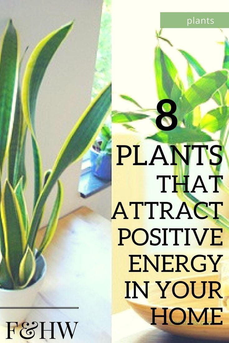 #plants #positive #energy #home #office http://ibeebz.com