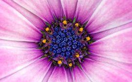 WALLPAPERS HD: Amazing Purple Flower