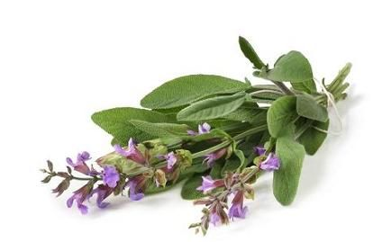Salvia sclarea is considered a woman's herb in part because of its estrogen-stimulating action