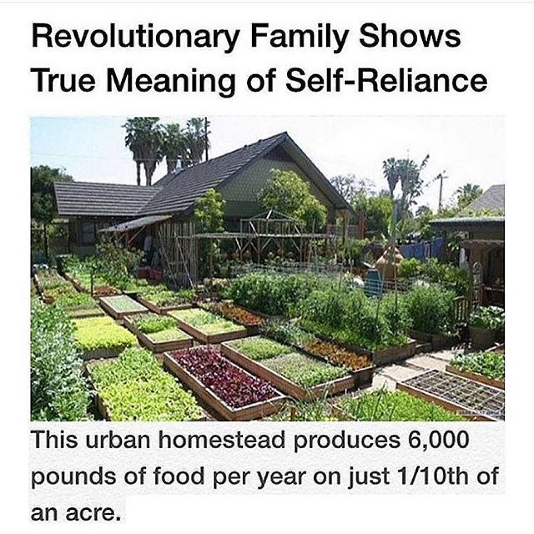 Instagram Photo By Goldenthoughts Apr 18 2016 At 4 16am Utc Urban Homesteading Homesteading Urban Farming