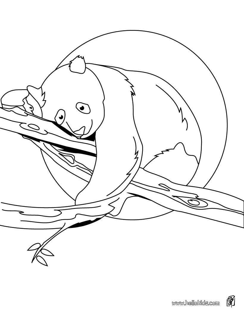 This Panda On Tree Coloring Page Would Make A Cute Present For