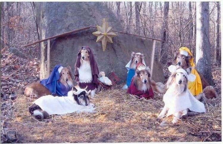 Pin by Candace Compton on Christmas Cards in 2020 Collie