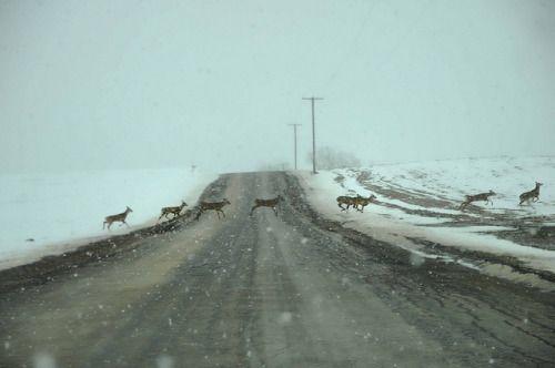 winterfellis:  Deer Crossing by maryshelsby on Flickr.