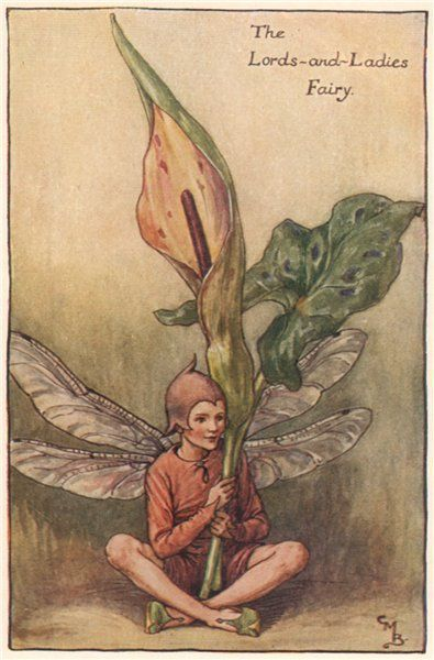 FLOWER FAIRIES/BOTANICALS: The Lords-and-Ladies Fairy; This is an original vintage Cicely Mary Barker Flower fairies colour print. It is not a modern reproduction, c1935; approximate size 11.0 x 7.5cm, 4.5 x 2.75 inches