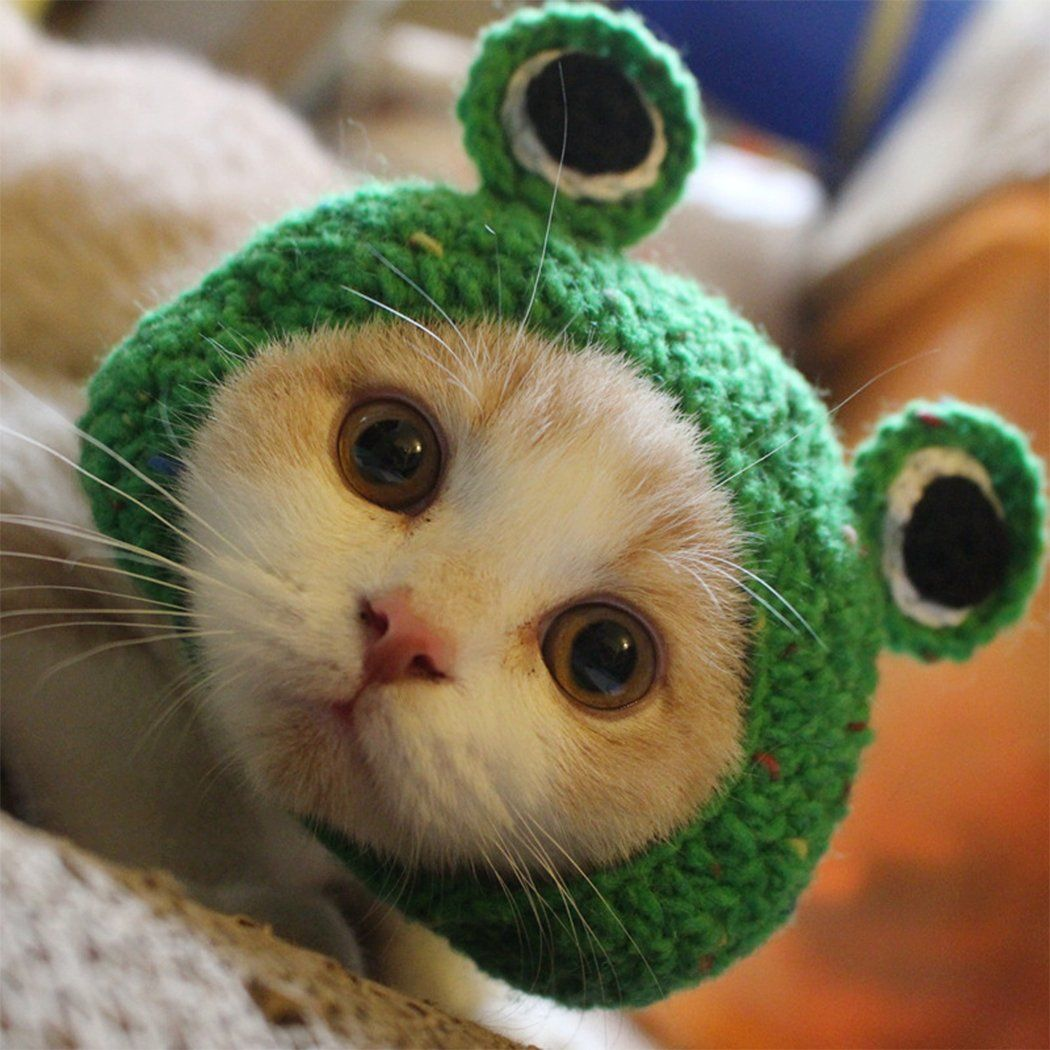 Pet Hat Dog Cat Pet Cap Handmade Knitted Woolen Yarn Hat For Puppy Teddy Cartoon Frog Animal Dog Cat Grooming Accessori Cat Accessories Kittens Cutest Cat Hat